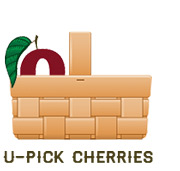 U-Pick Cherries at Bittner-Singer Orchards